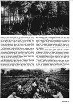 giornale/RML0021505/1940/unico/00000017