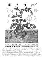 giornale/RML0024944/1939/unico/00000168