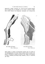 giornale/TO00013586/1926/unico/00000089