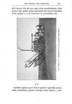 giornale/TO00174387/1903/unico/00000045