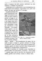 giornale/TO00174387/1903/unico/00000131