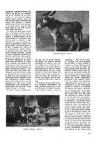 giornale/TO00179380/1943/unico/00000023