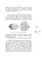 giornale/TO00180507/1917/unico/00000047