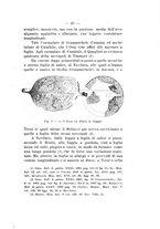 giornale/TO00180507/1917/unico/00000051