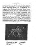 giornale/TO00189117/1896/unico/00000181