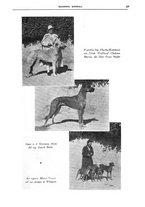 giornale/TO00192225/1935/unico/00000035