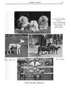 giornale/TO00192225/1935/unico/00000041
