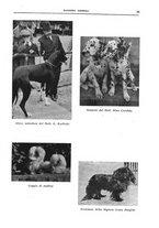 giornale/TO00192225/1937/unico/00000041
